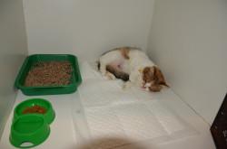 Ветеринарная клиника Альфа Вита