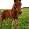 Где покататься на лошади в Киеве