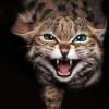 Может ли кошка представлять опасность для ребенка