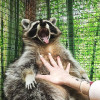 Контактные зоопарки в Киеве