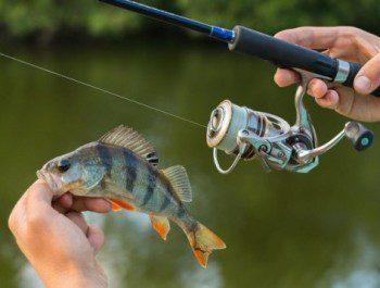 Ловля на ультралайт: основные правила выбора снастей и водоемов