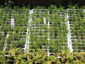Как сеять семена, чтобы в итоге получить крепкую и здоровую рассаду?