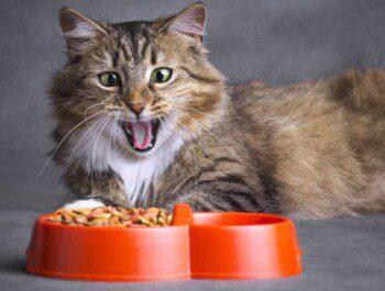 Влажный корм: балуйте пушистика полезным и вкусным питанием