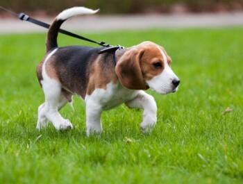 Самые актуальные и необходимые товары для собак